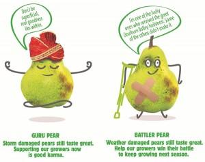 Battler-and-Guru-Pear-web